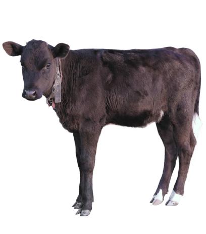 slide-calf